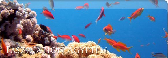 Careless Reef Ägypten