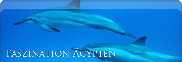 Dolphin House Ägypten