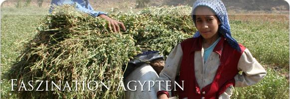 Landwirtschaft Ägypten