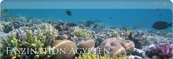 Unterwasserwelt Ägypten